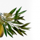 Árbol de Té, maravilla australiana
